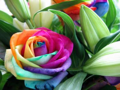 http://ismahane.i.s.pic.centerblog.net/5xg6gsvw.jpg